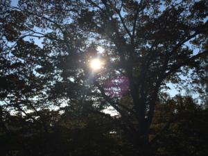 Sonneneinstrahlung reicht nicht aus